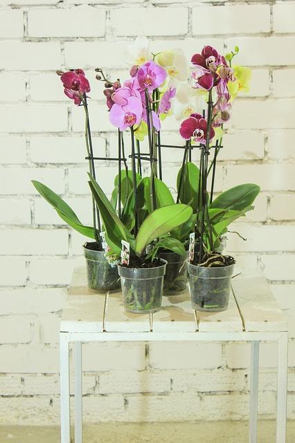 Орхидея - късмет, любов, семейно щастие;