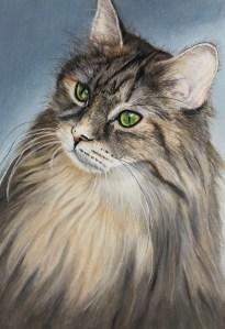 Long and Short Hair Cat