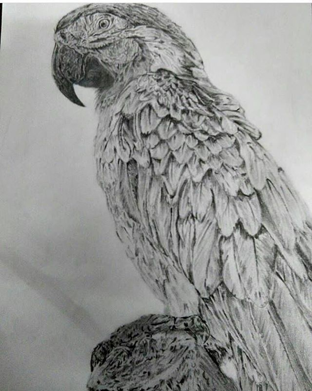 dessindeshivy 11