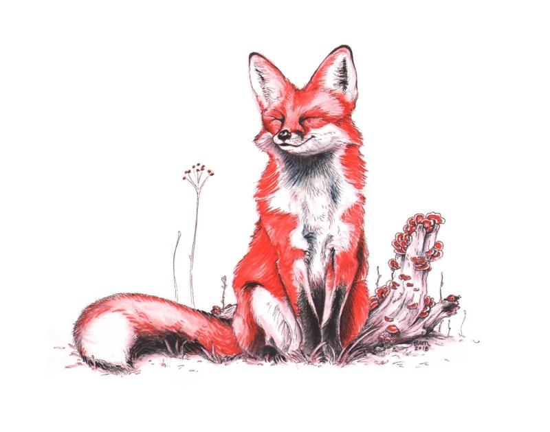 2018 Red Fox