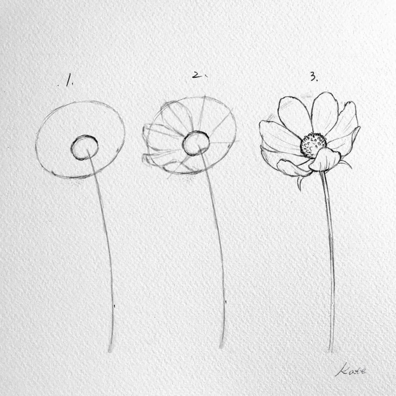 How to draw flowers for beginners? 79