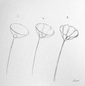 cosmos flower 5