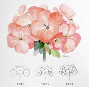 geraniums for begginers