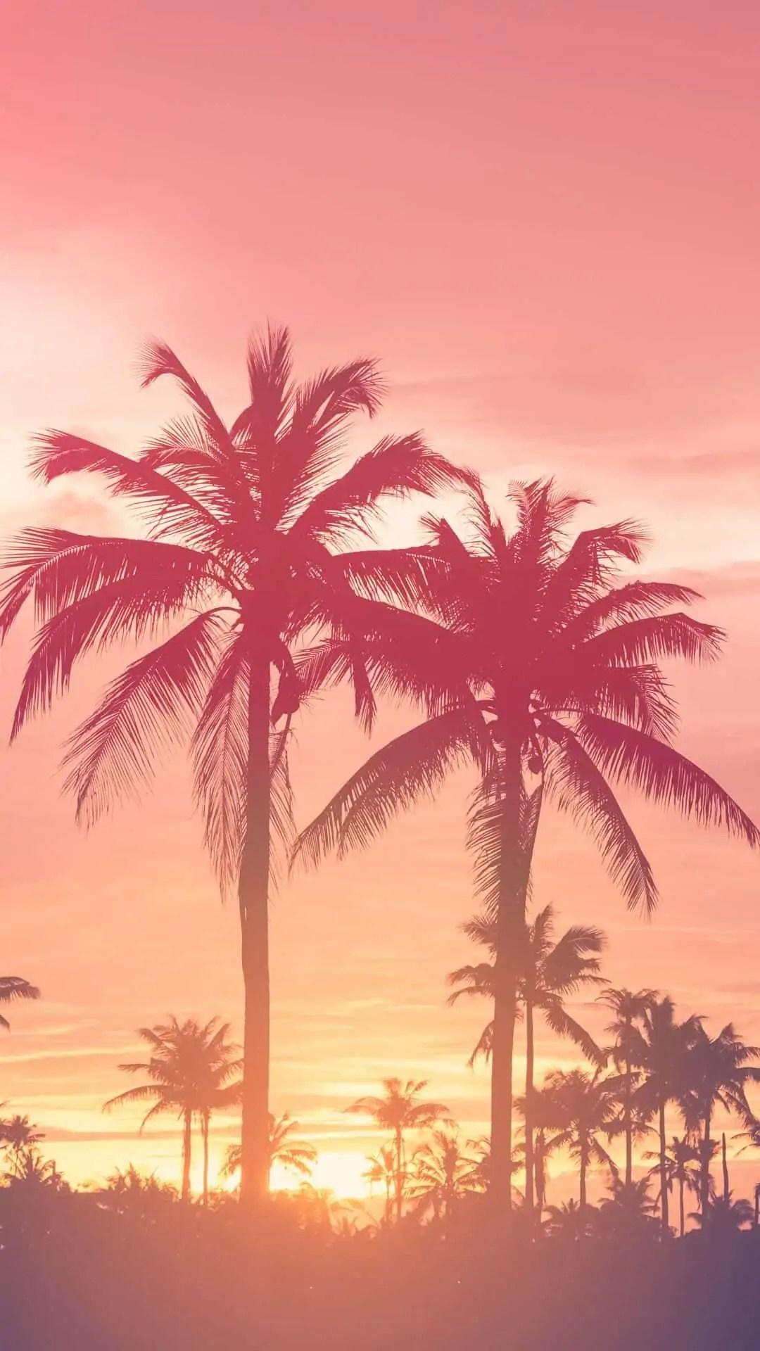 Pink-sunset-wallpaper 5