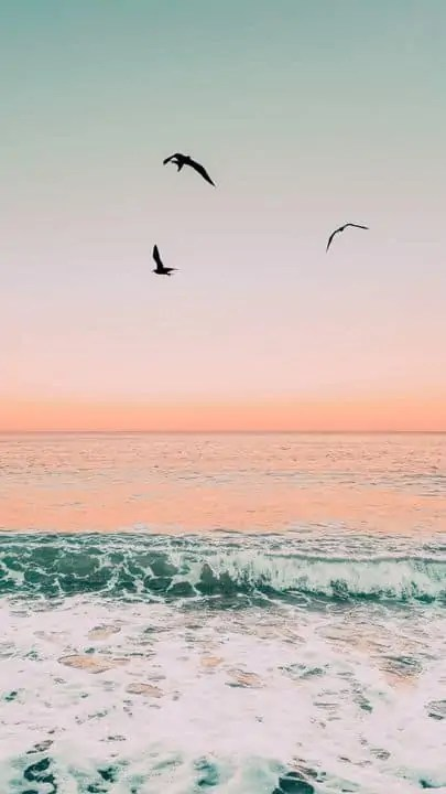 The-latest-iPhone11-iPhone11-Pro-iPhone-11-Pro-Max-mobile-phone-HD-wallpapers-free-download-birds-sea-waves-foam-sunset-Free-Wallpaper-Download-Free-Wallpapers 5