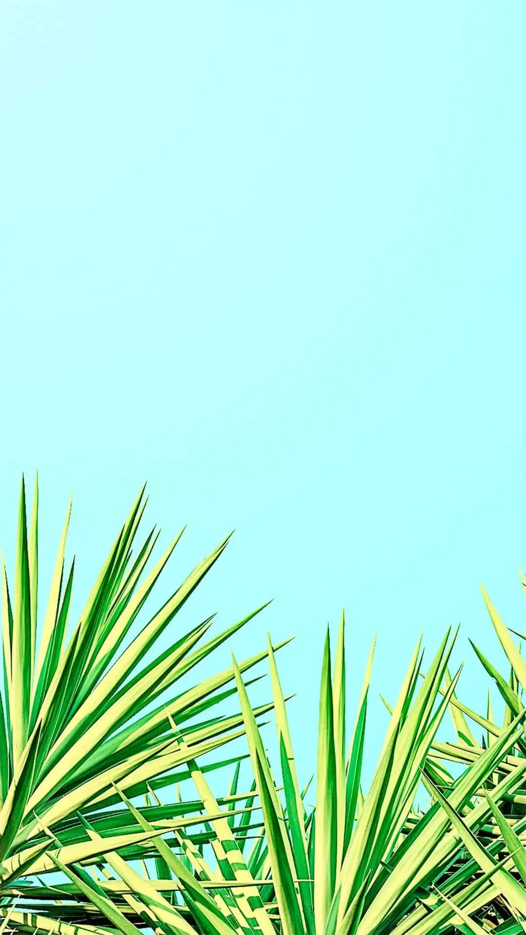 Summer wallpaper for iPhone