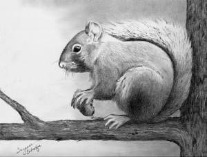 drawings pencil easy animals drawing mine animal sketches squirrel schaefer suzanne sketch beginners nature cool draw anime landscape visitar keywordpicture