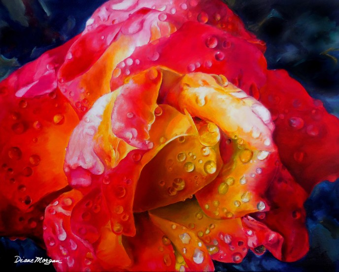 Morgan 14 Rainy Day Rose - oil on canvas 24 x 30