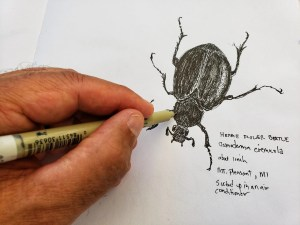 Drawing a Beetle