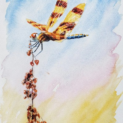 A painting of a dragonfly called Halloween Pennant