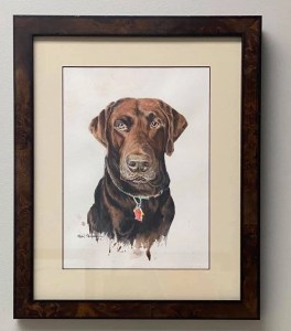 A framed watercolor painting of Gus the Chocolate Lab