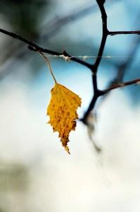 beeb_Last to Fall