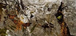 dere_03-hidden garden copy