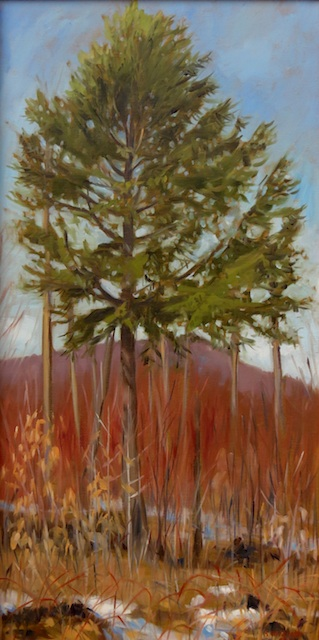 Sandra Hildreth - Saranac Lake, NY Title: Shelterwood Medium: oil Size: 24x12Size: 9x12