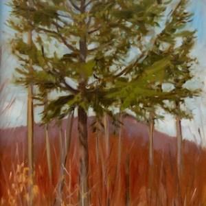 Sandra Hildreth - Saranac Lake, NY Title: Shelterwood Medium: oil Size: 24x12Size: 9x12