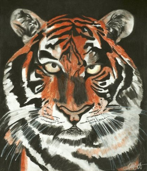 """Tiger Charcoal and Pencil 8"""" x 11"""""""
