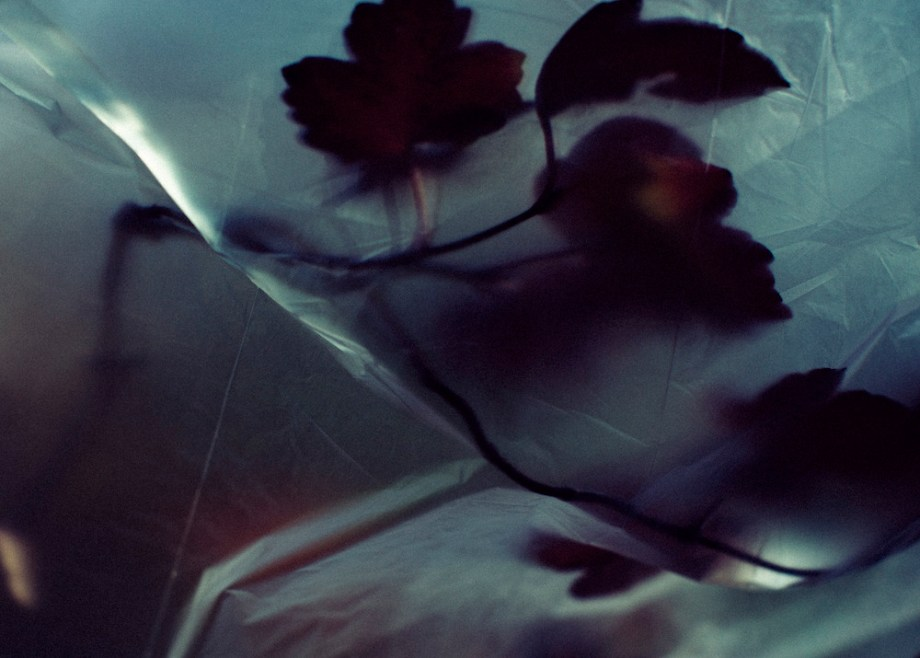 Title:Otium 1 Medium:photography