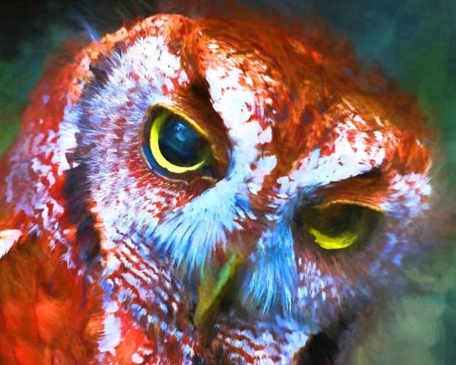 Title:red OWL Medium:DIGITAL PAINTING Size:13 X19