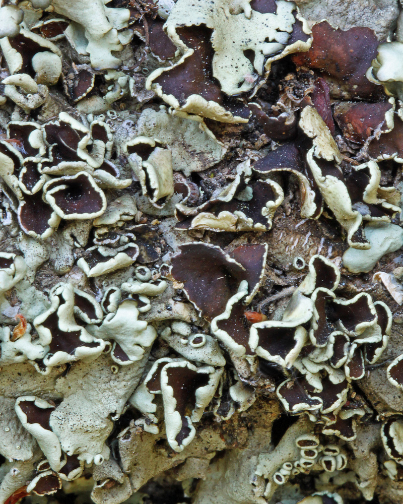 "Title:Lichen Spillway Medium:	Photography Size:	16""x20"""