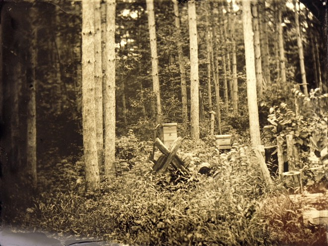 Title:Apiary and Trees Medium:	Wet Plate Photography Size:	4x5