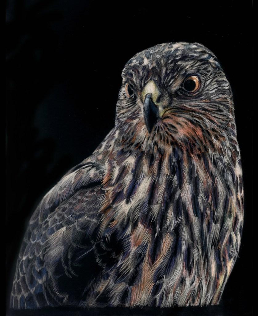 Title Falcon gaze Medium colored pencil Size 20x30 cm