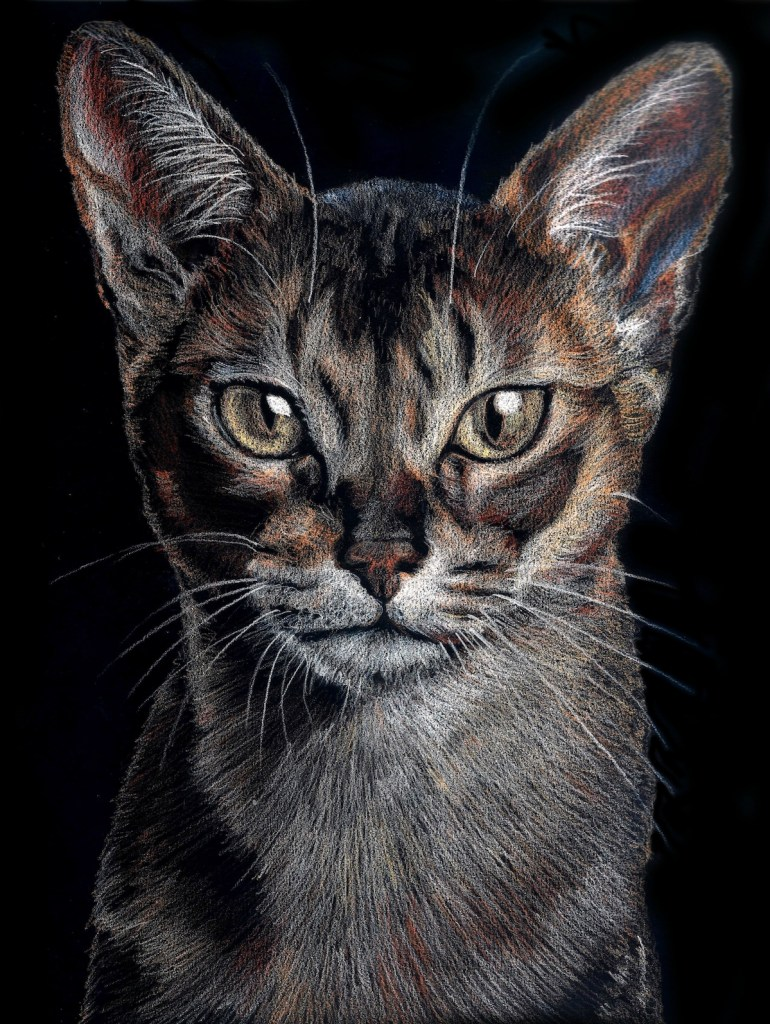 Title Cat gaze Medium colored pencil Size 20 x 30 cm