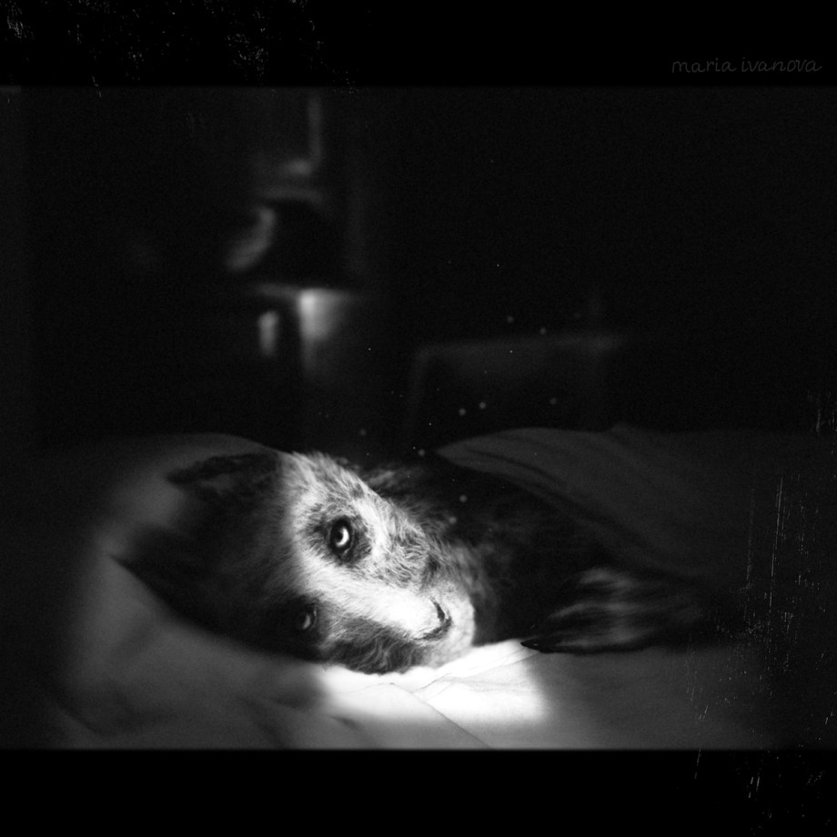 Dying Daylight Medium Digital art Size 2000x2000 pixels