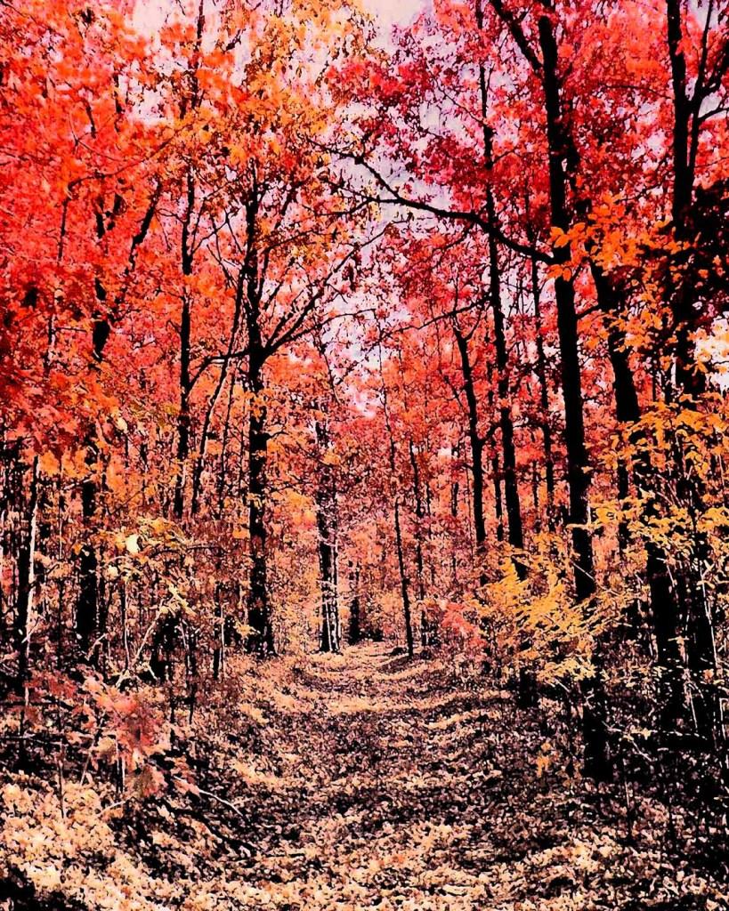 Autumn Trail Medium Digital Photography Size 1152 x 1440 and 500 KB