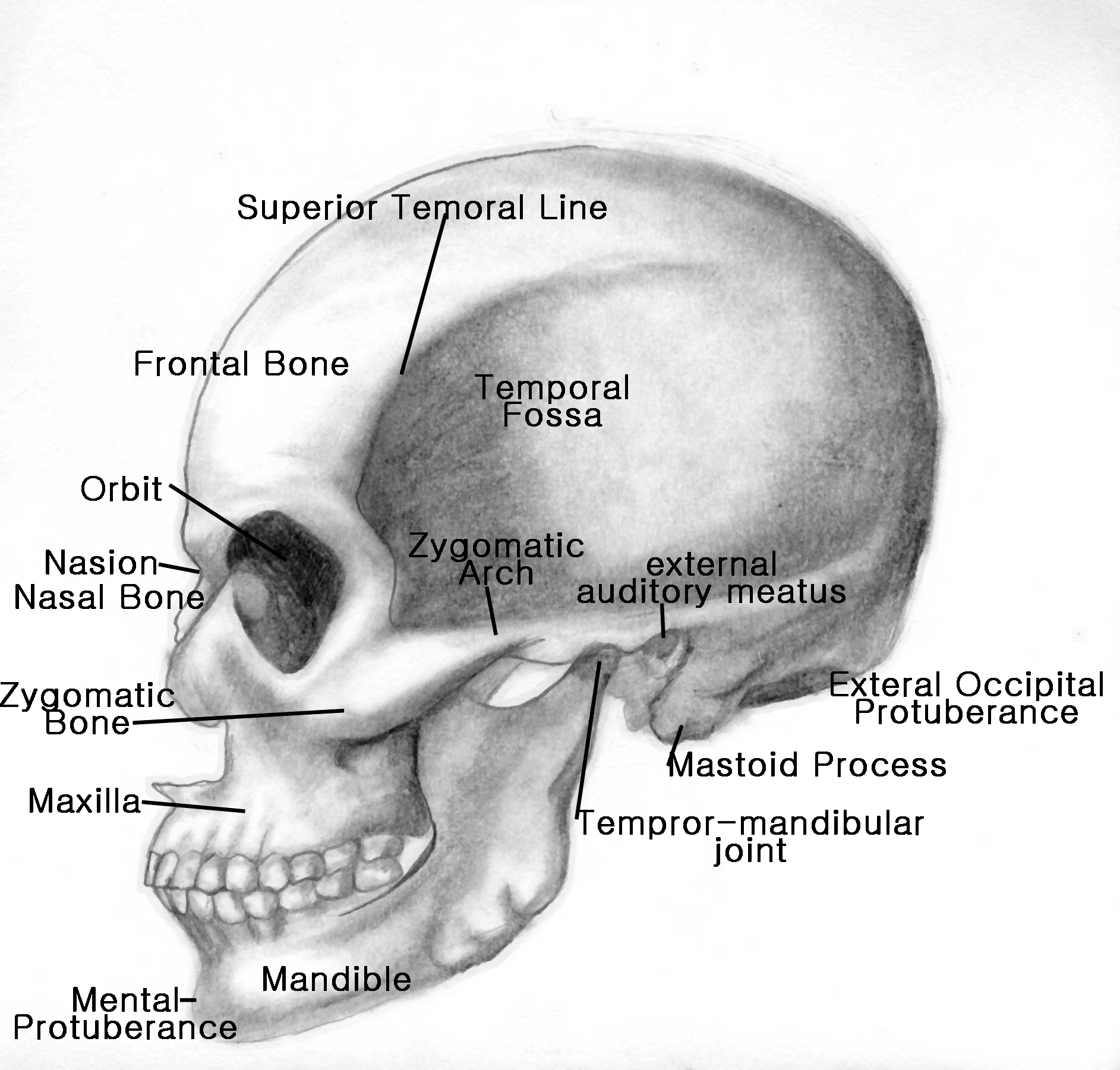 The Skull Part 2