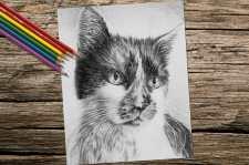 catportrait_8x10_coloring_onwood
