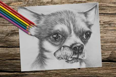 chihuahua_8x10_coloring_onwood