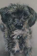 """Terrier"" 5""x7"" Colored Pencil on Paper, SOLD"