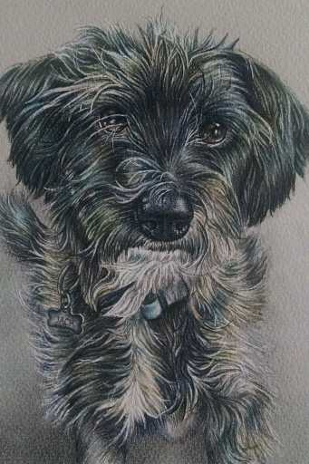 """""""Terrier"""" 5""""x7"""" Colored Pencil on Paper, SOLD"""