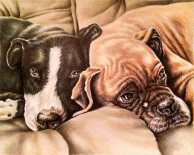 """""""Dogs Resting"""" 11""""x14"""" Colored Pencil on Paper, SOLD"""