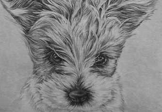 """Puppy Drawing 2"" Graphite Pencil on Paper, 5""x7"" SOLD"