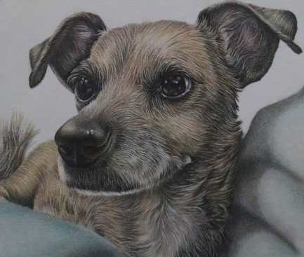"""""""Dog Resting"""" Colored Pencil on Paper, 8""""x10"""" SOLD"""
