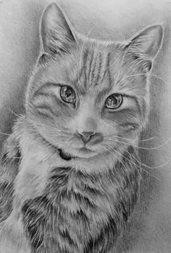 """Pencil Drawing of Cat"" Graphite Pencil, 5""x7"" SOLD"