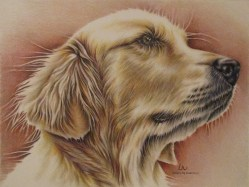 """Goldie"" 9"" x 12"", $100 Colored Pencil on Watercolor Paper"