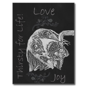 Chalk Drawing of Dog on Postcard http://www.zazzle.com/drawing_of_dog_drinking_in_chalk_postcards-239897767687501878