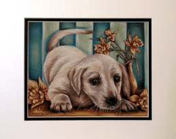 """""""Labrador with Daffodils"""" 8"""" x 10"""", $60 Pastel Pencil on Drawing Paper"""