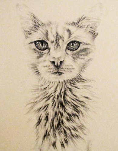 https://www.etsy.com/listing/234369669/white-cat-drawing-8x10-cat-art-print-for?ref=shop_home_active_6