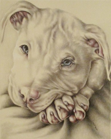 https://www.etsy.com/listing/234397352/white-pit-bull-dog-drawing-8x10-dog-art?ref=shop_home_active_5