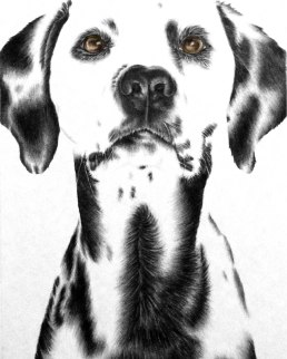 https://www.etsy.com/listing/248437964/art-print-dalmatian-black-and-white-dog?ref=shop_home_active_3