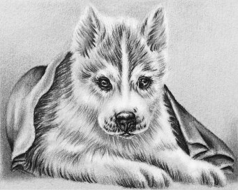 https://www.etsy.com/listing/231544563/husky-dog-coloring-book-pages-adult?ref=shop_home_active_1