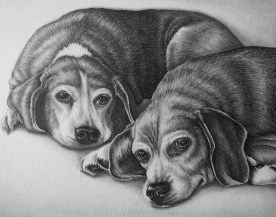 """""""Drawing of Two Dogs"""" 11""""x14"""", Graphite Pencil on Paper, SOLD"""