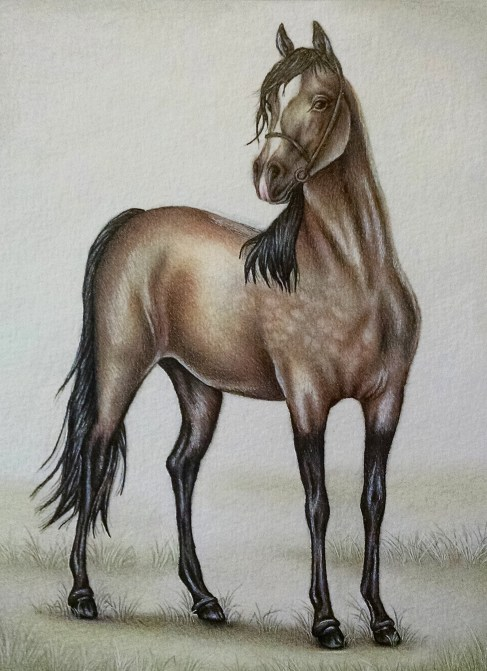 """Horse in Pasture"" Colored Pencil on paper, 8""x10"", SOLD"