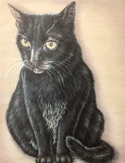 """""""Portrait of a Black Cat"""" 8""""x10"""", Colored Pencil on Paper, SOLD"""
