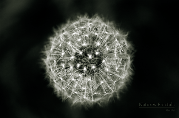 nature__s_fractals_by_seanonel