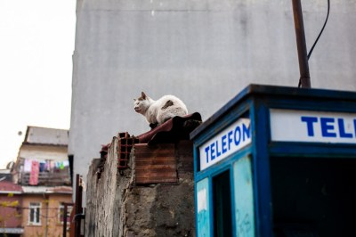 A cat sits on a wall in Istanbul, David Gross