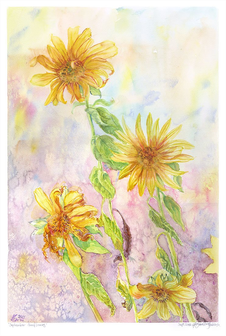"12""x18"" watercolour on 140lb Fabriano paper. Sunflowers from a balcony garden, flowering late in September. ~2016"
